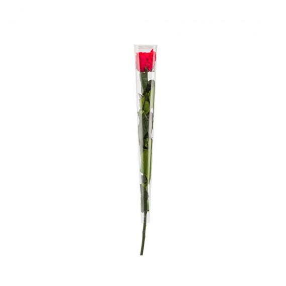 Rose standard Rouge
