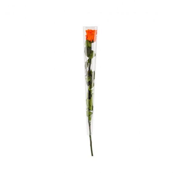 Rose standard Orange