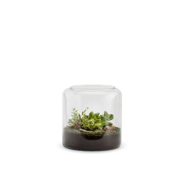 Mia S Succulente