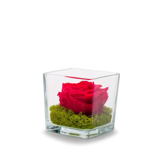 Verrine Genova 10 Rouge