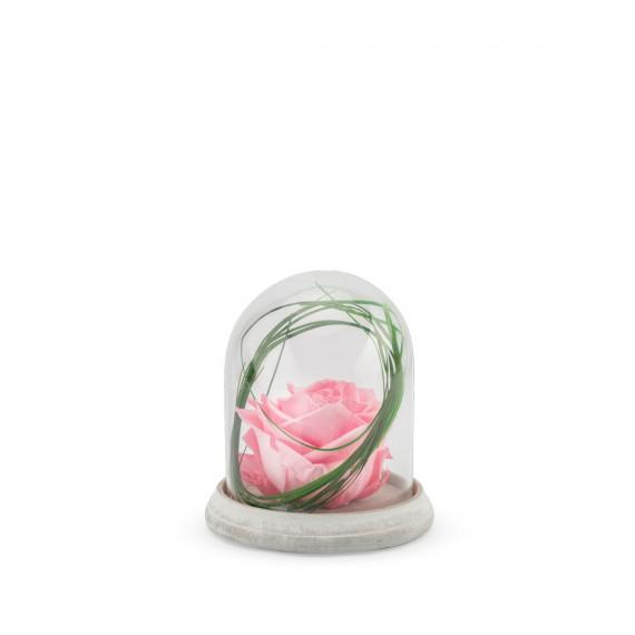 Verrine  Cloche  Ciment S - Rose pastel