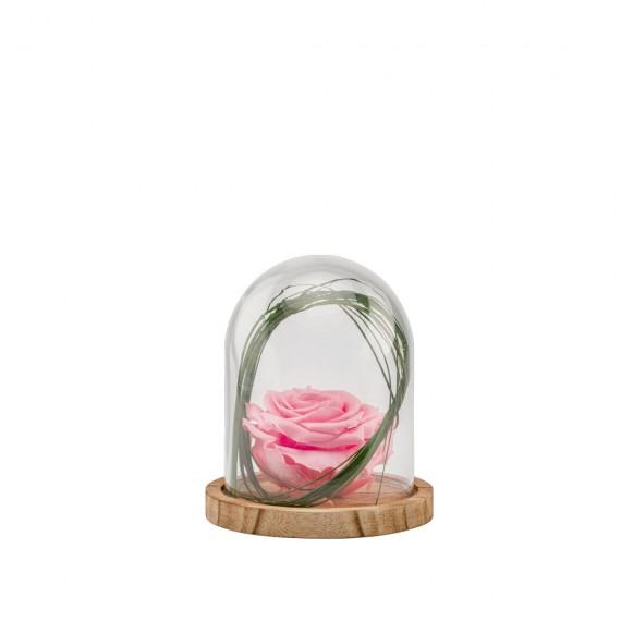 Verrine Cloche S bois - Rose pastel