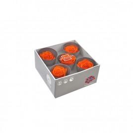 Tête de rose Queen Orange (boîte de 5)