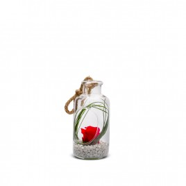 Verrine Bottle XS