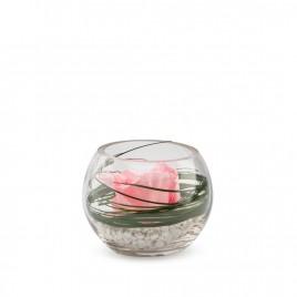 Verrine Venezia 11 - Rose pastel