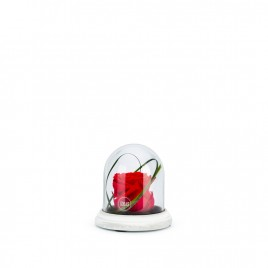 Cloche Ciment XS Rouge