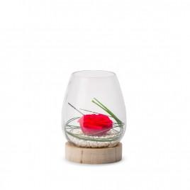 Verrine Tulip Wood M