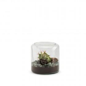 Mia S Cactus