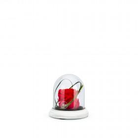 Cloche Ciment XS Rouge