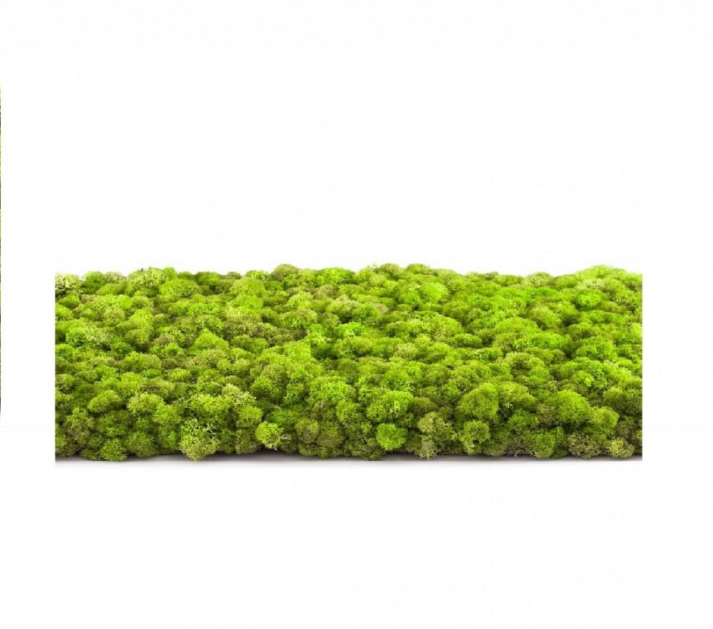 Lichen vert - 5 kg